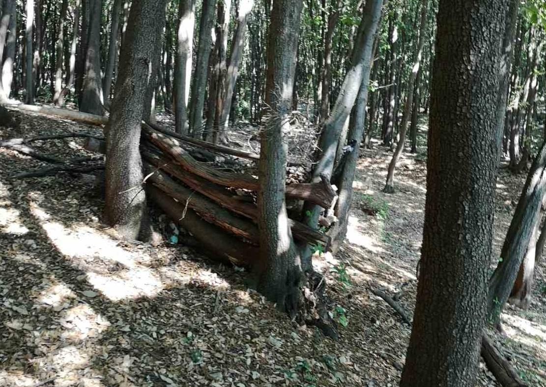 očišćena šuma[175255]